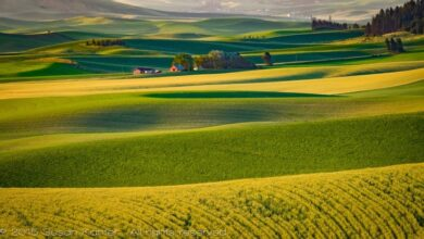 Photo of The Palouse: encontrando su alma artística como fotógrafo