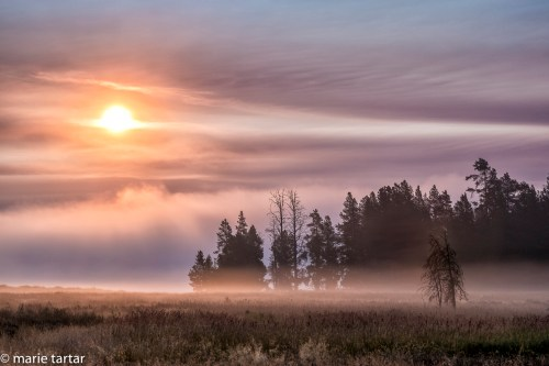 201509_Yellowstone_fog_sunrise_MTartar.jpg