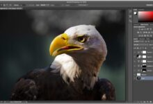 Photo of Conozca la interfaz de Photoshop, primera parte