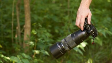 Photo of ¿La nueva Olympus 100-400 mm da en el blanco?