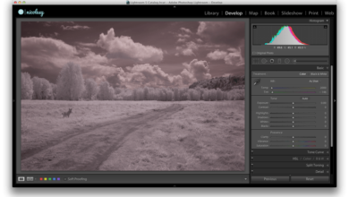 Photo of Procesar una imagen infrarroja con Lightroom y Photoshop